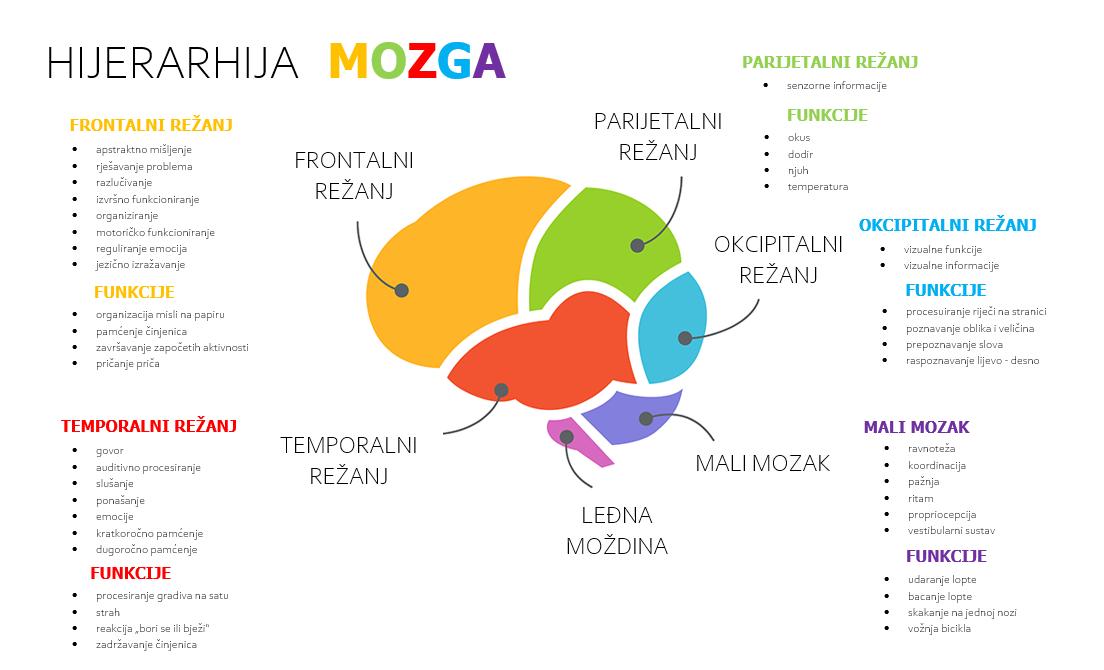 Hijerarhija mozga i učenje